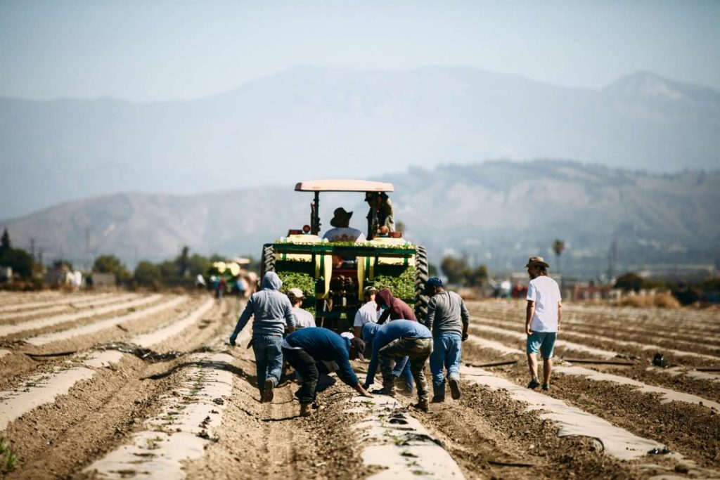 TRACTOR- Farming-hemp.jpeg